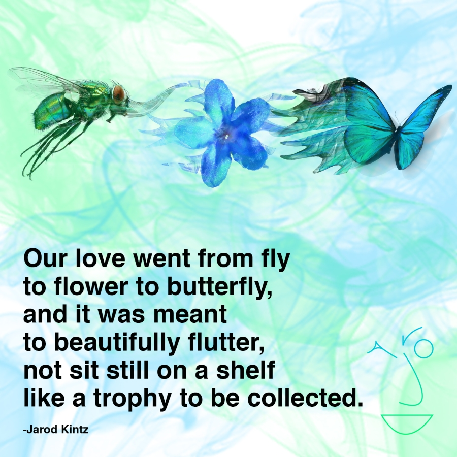fly to flower to butterfly square